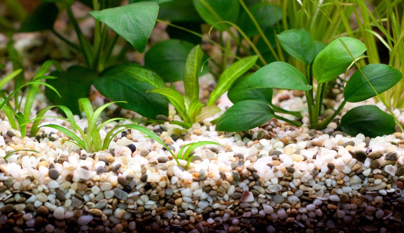 Bodengrund Aquarium Aquariumboden Pflanzen Mikroorganismen