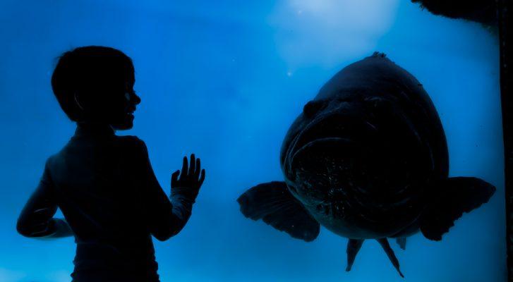 Haustiere helfen gegen Schulstress - Stressabbau - Fische - Aquarium - Beruhigung
