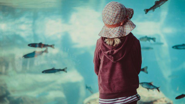 Interview Fische als Sozialarbeiter - Aquarium - Stressabbau