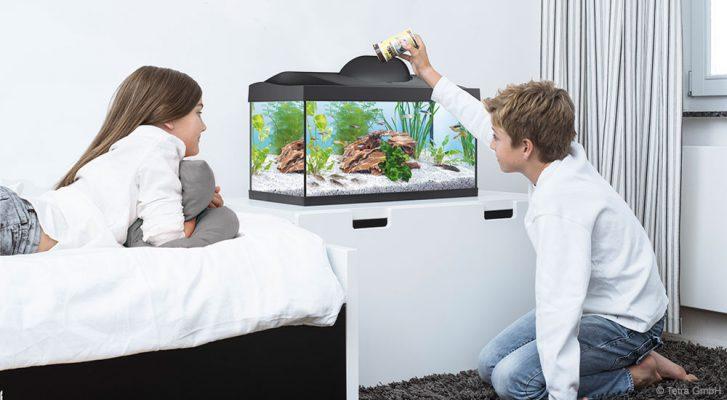 Aquarium für Kinder | Tetra Aquaristik Blog