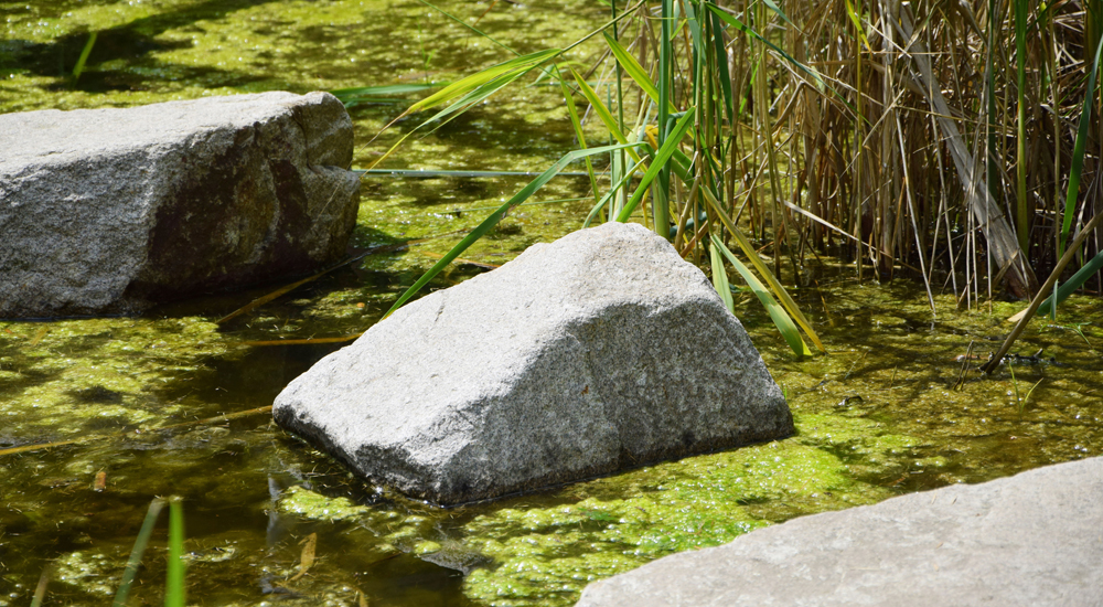 Algen Im Gartenteich Tetra Aquaristik Blog