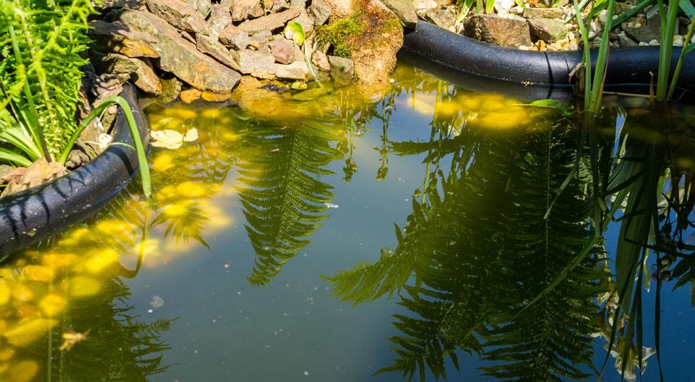 Etwas Neues genug Schwebealgen färben Teichwasser grün | Tetra Aquaristik Blog #SH_54