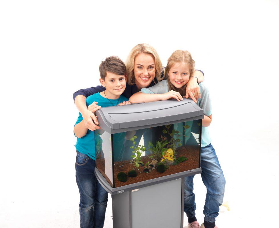 Aquarium einrichten Aquarium einrichten leicht gemacht Schritt für Schritt Anleitung Fische einsetzen