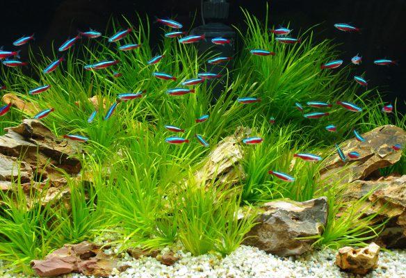 Aquarium Alles rund ums Aquarium Aquarium einrichten Hardscape Softscape schönes Aquarium