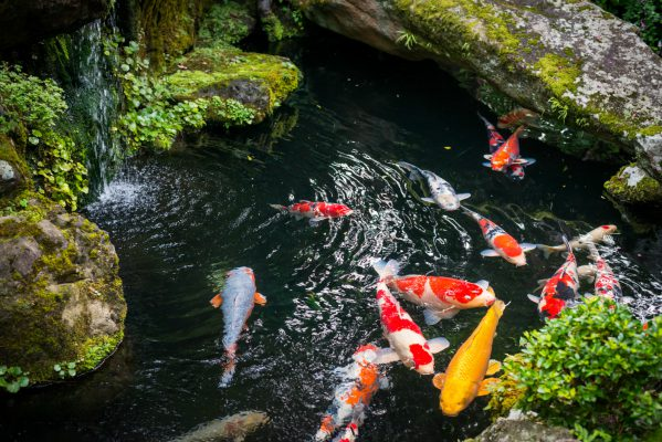 Prevent and treat pond fish diseases