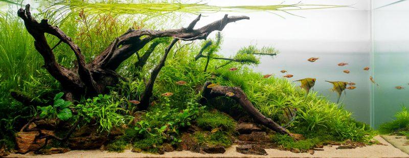 Aquarium Plants: Beautiful and Beneficial