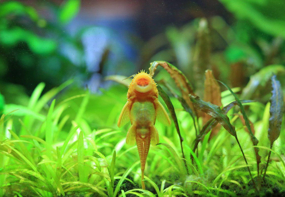 Algae in your aquarium or pond
