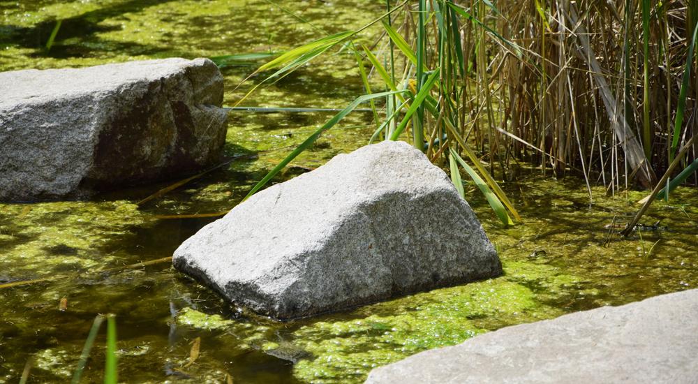 alghe nei laghetti tetra advanced fishkeeper blog