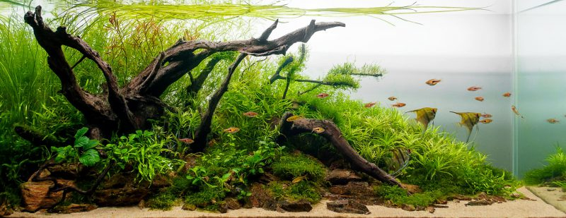 Aquarium Plants: Beautiful and Beneficial