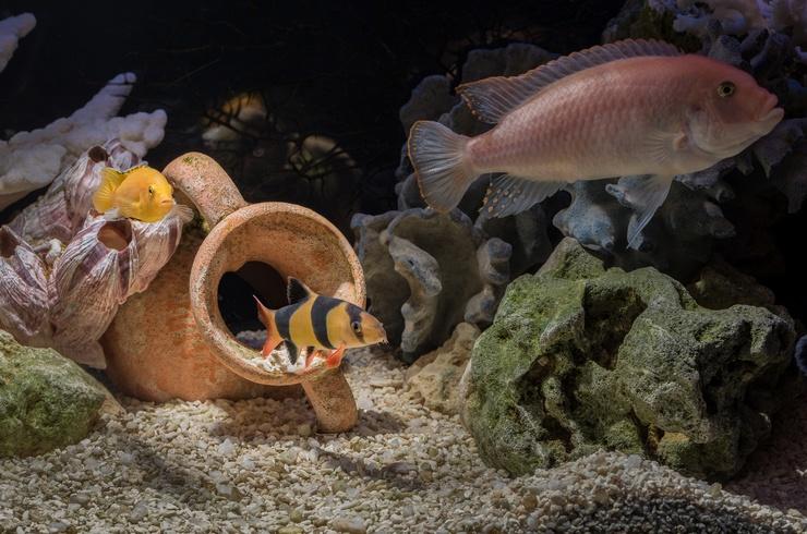 Укрытия в общем аквариуме с боциями