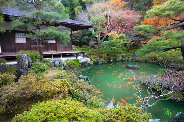 Пруд с карпами кои возле буддийского храма Гинкаку-дзи. Киото, Япония