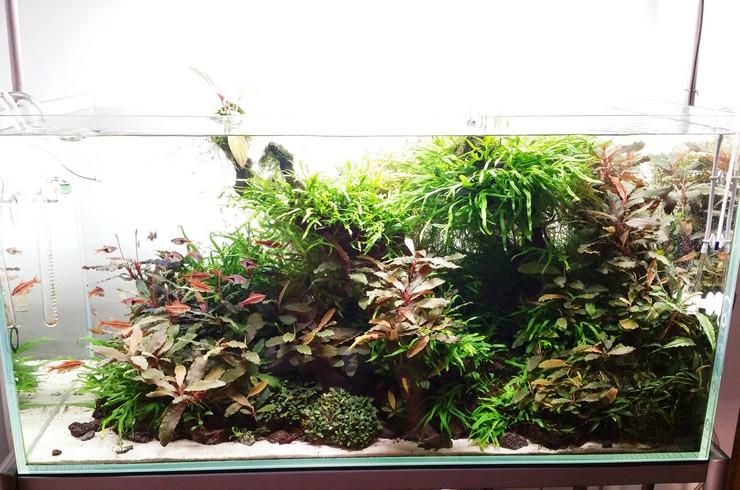 Эти растения требовательны не столько к условиям содержания, сколько к их стабильности