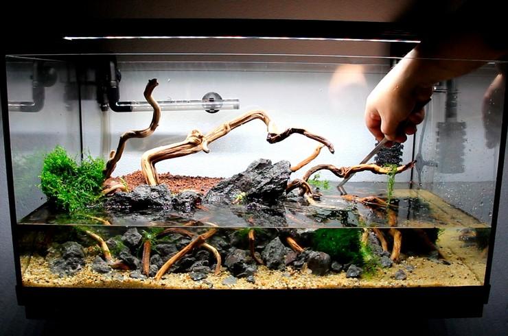 Заполняем аквариум водой, чтобы уберечь мох от высыхания