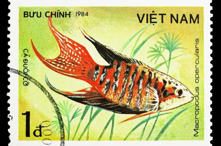 Марка с изображением макропода. Вьетнам, 1984 год