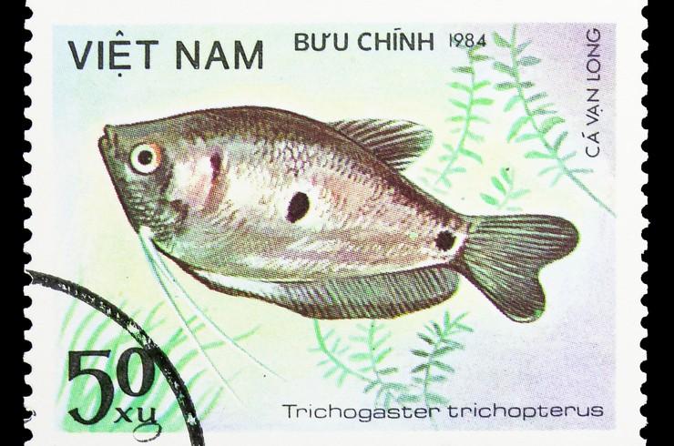 Вьетнамская марка с изображением голубого гурами