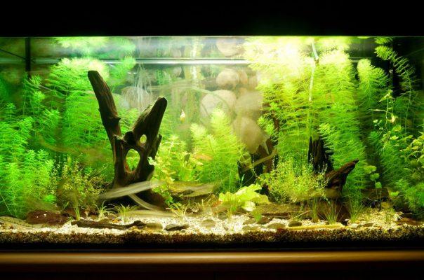 Холодноводный аквариум, воссоздающий характерный биотоп одной из рек Европы