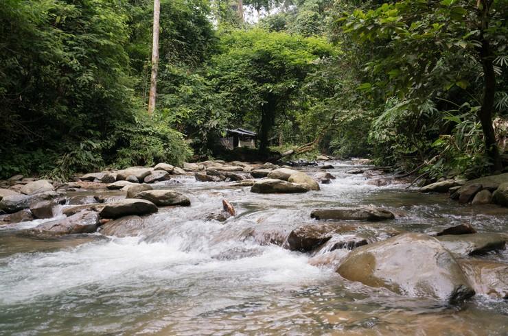 Небольшая река на острове Суматра – биотоп, типичный для суматранских барбусов