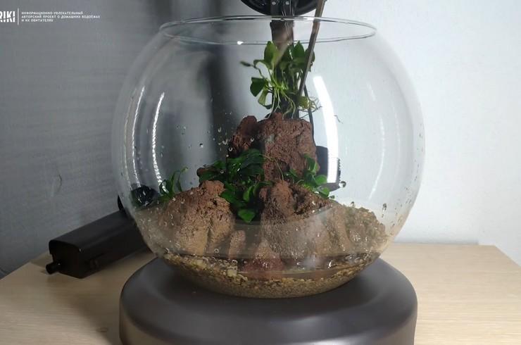 Неприхотливые виды растений идеально подходят для небольших аквариумов