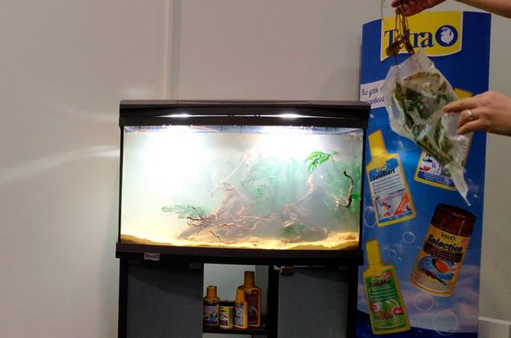 Нимфея и папоротник болбитис – неприхотливые виды аквариумных растений
