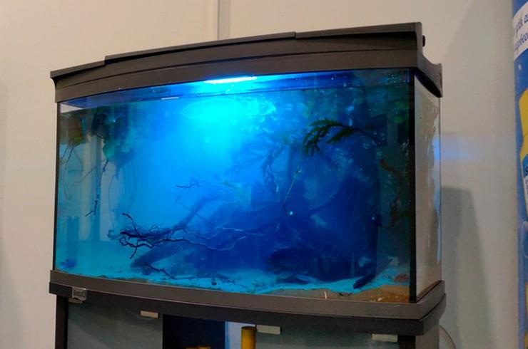 Ночная подсветка позволяет наблюдать за рыбками в темное время суток