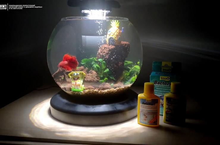 Петушок в новом аквариуме