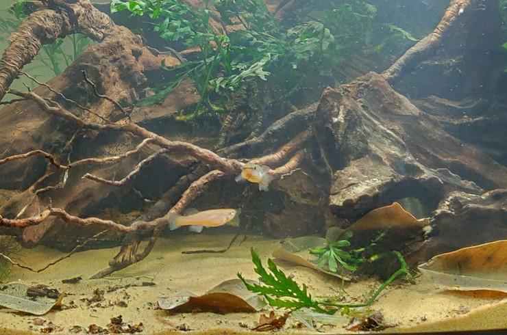 Рыбки килли в новом аквариуме