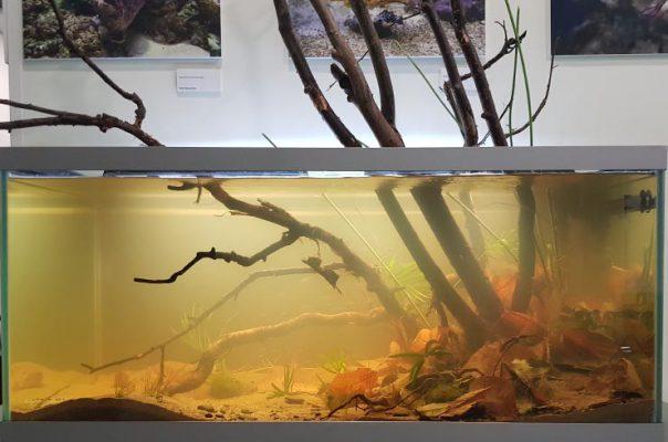 Воссозданный биотоп мелководного лесного ручья бассейна реки Рио-Негру