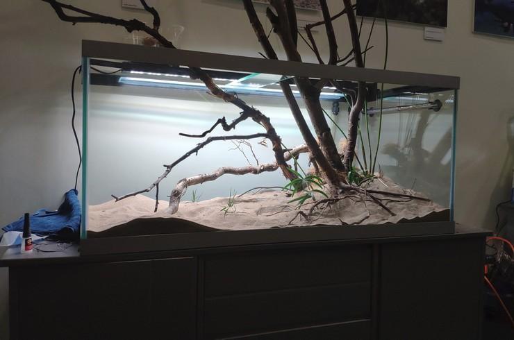 Высаживаем несколько кустиков элеохариса