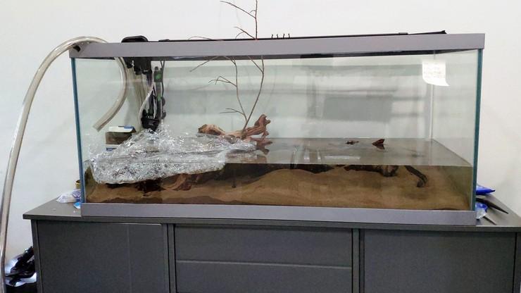 Заполнять аквариум необходимо так, чтобы струя воды не размыла песок