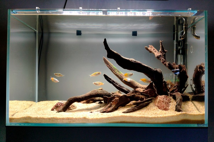 akvarium-obemom-180-litrov-s-raduzhnicami