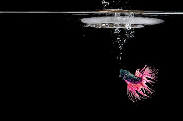 Какие рыбки дышат атмосферным воздухом