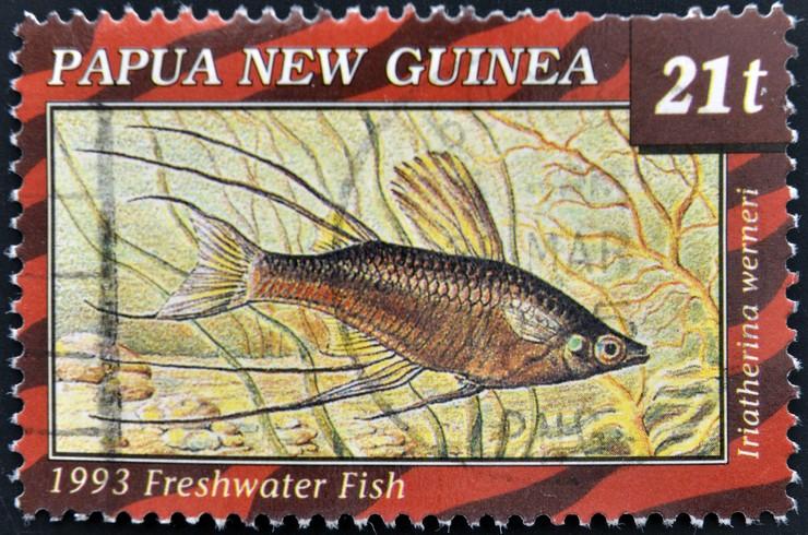 Почтовая марка с изображением ириатерины Вернера. Папуа-Новая Гвинея, 1993