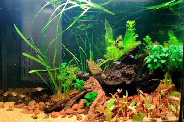 Аквариум объемом 60 литров с живыми растениями