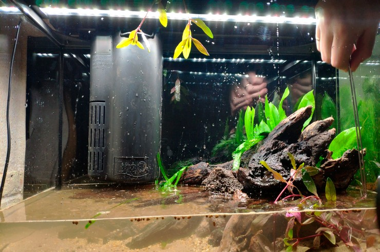 это давно запуск аквариума пошаговая инструкция с фото такое