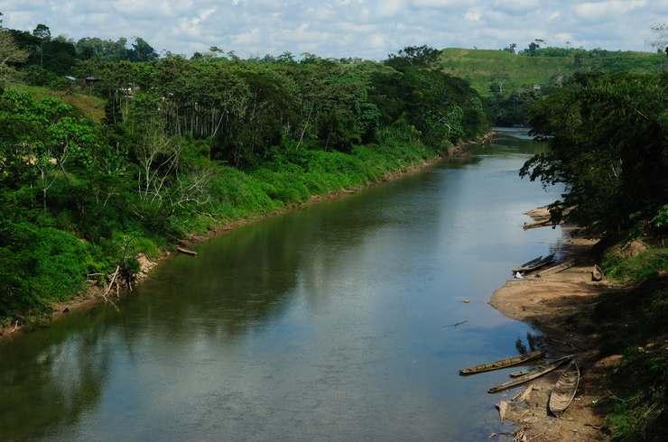 Река Укояли в Южной Америке — типичное местообитание коридораса панды