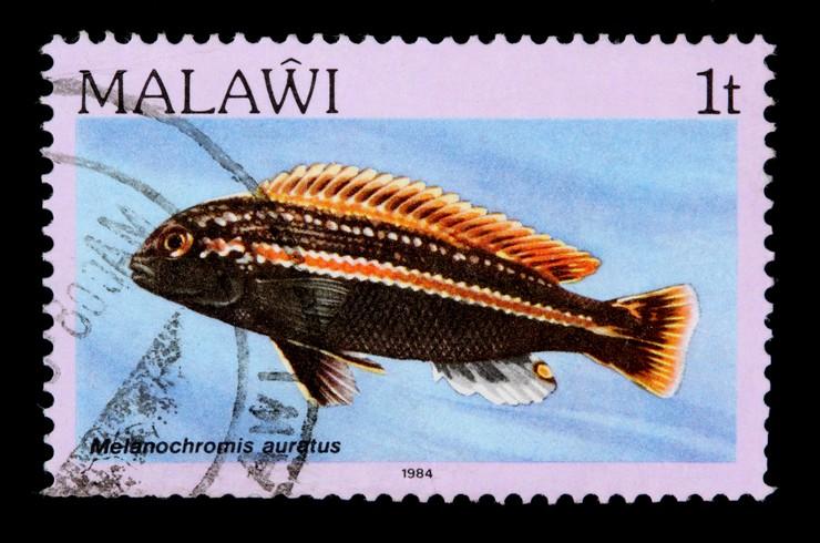Марка с изображением золотого меланохромиса, 1984 год