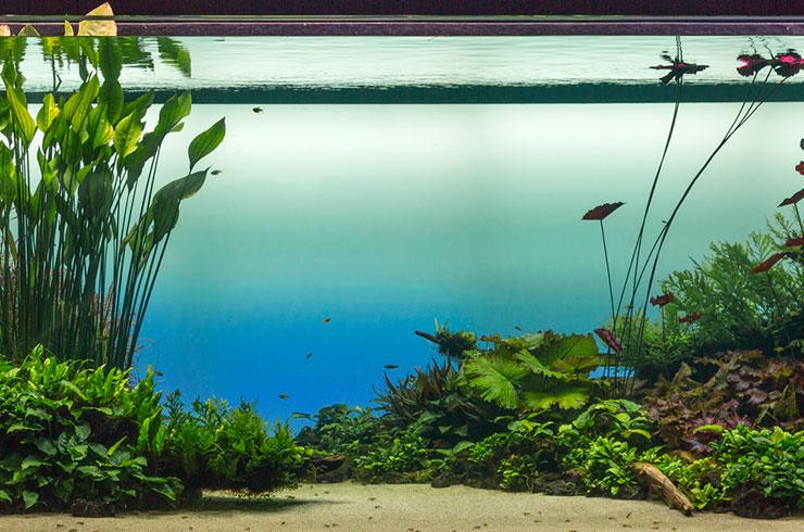 Посадите аквариумные растения