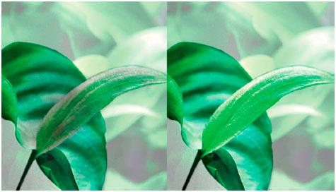 Применение Tetra Algetten. До и после