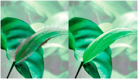 Применение Tetra Algizit. До и после