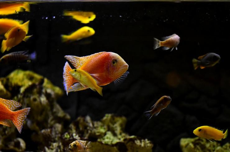 Чем больше рыба – тем обширней должна быть ее территория и тем выше требования к окружению.