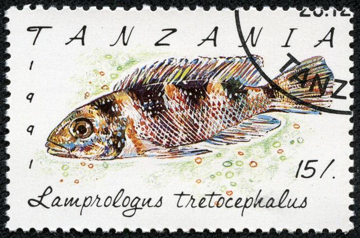 Марка с изображением лампрологуса. Танзания, 1991