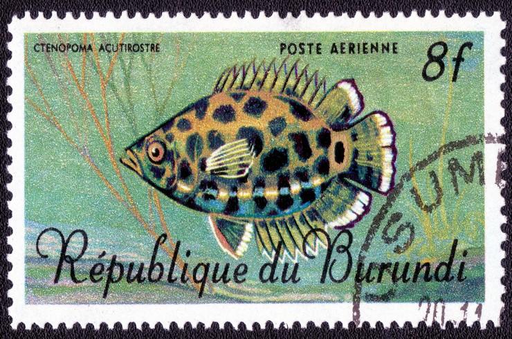Марка с изображением леопардовой ктенопомы. Республика Бурунди, 1986 год