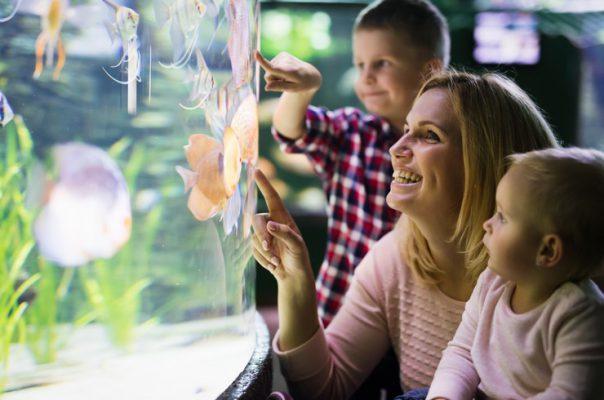 Покупка рыбок – ответственный шаг