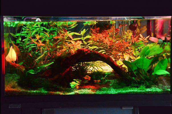 akvarium-54-litra-prud-s-vodyanymi-liliyami