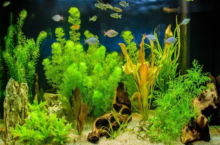 Аквариум с живыми растениями