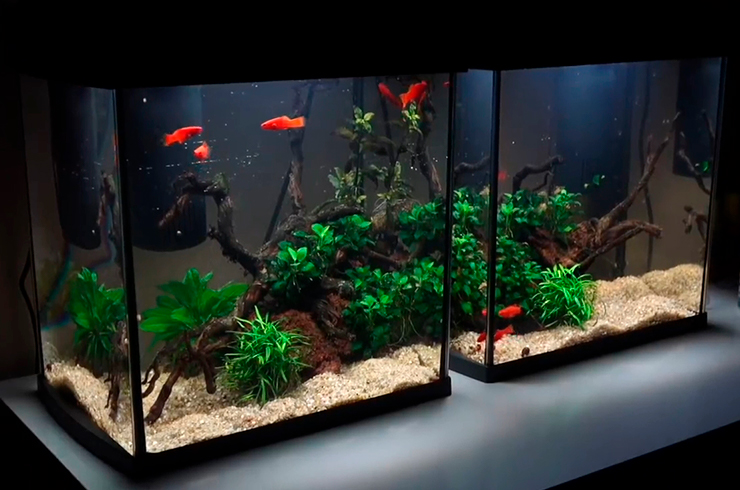 Аквариум объемом 30 литров с живыми растениями
