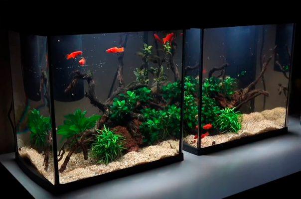 Правильный уход за аквариумом – залог здоровья и долголетия рыбок
