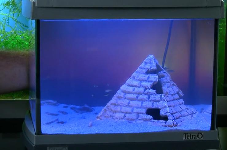 Готовый аквариум в режиме ночного освещения