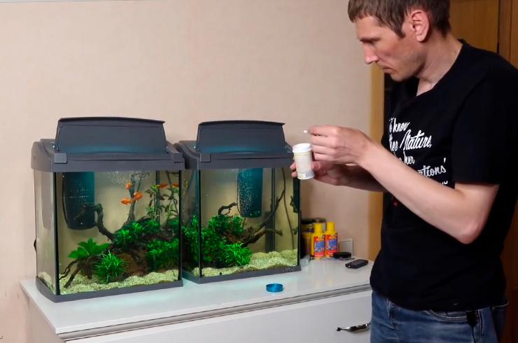 Кормление рыбок сухим кормом