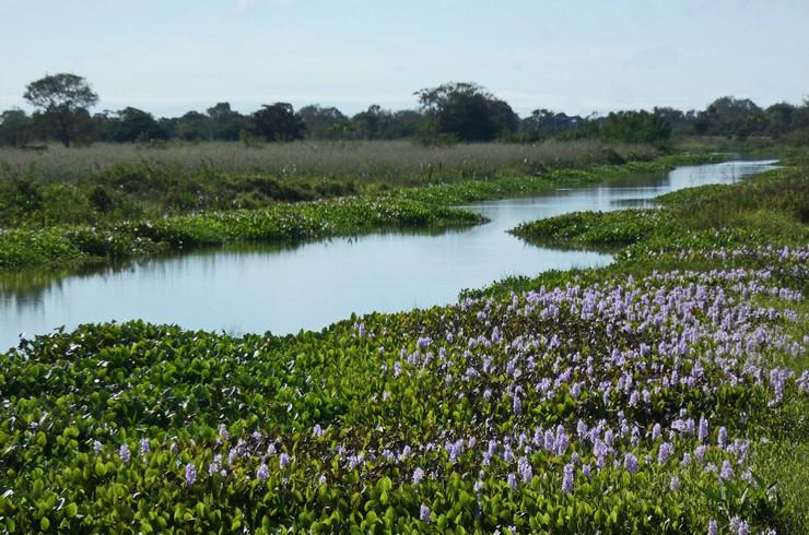 Льянос – плодородные долины рек Южной Америки